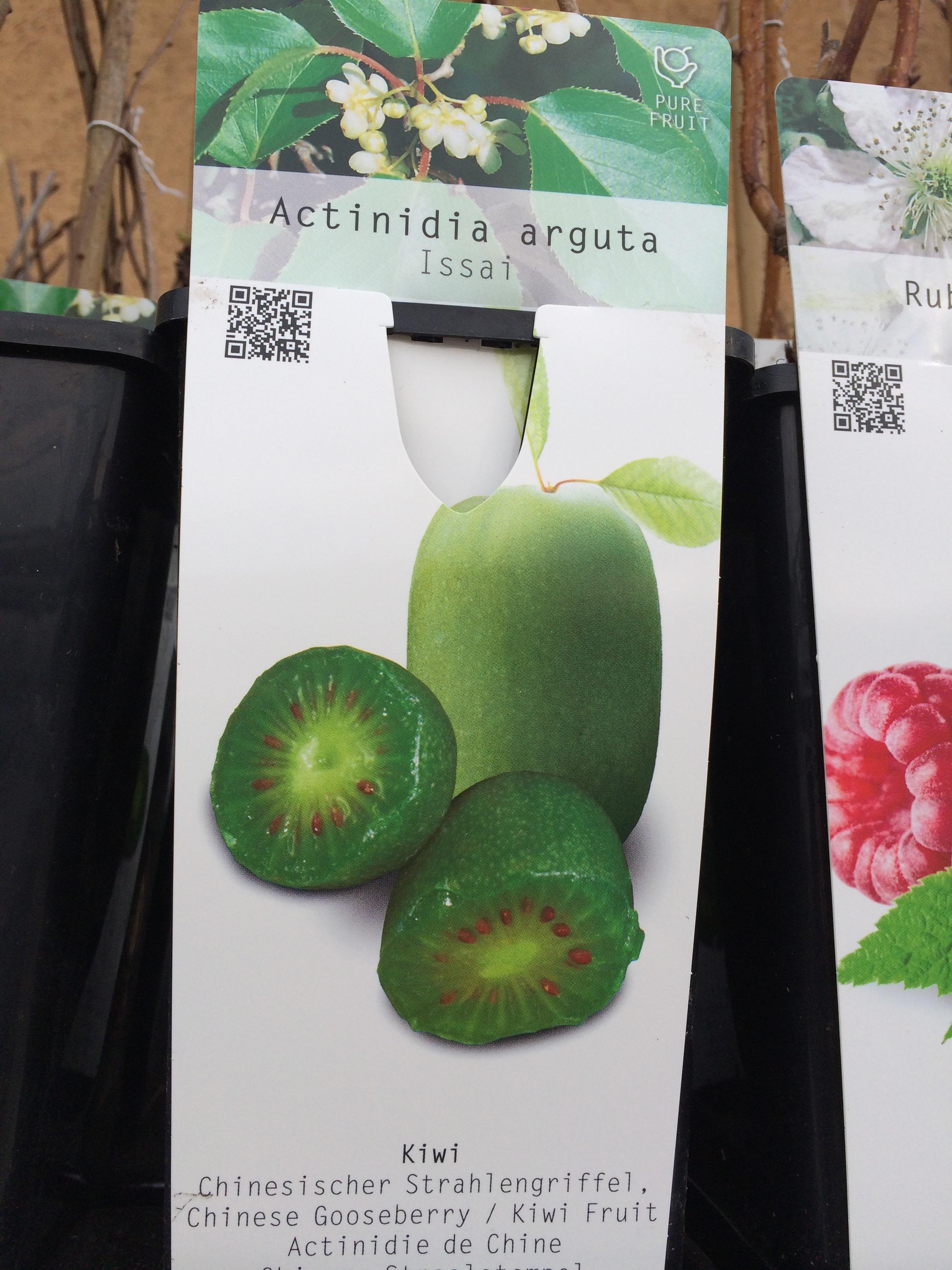 Vendita online piante da frutto linea verde for Piante da frutto online