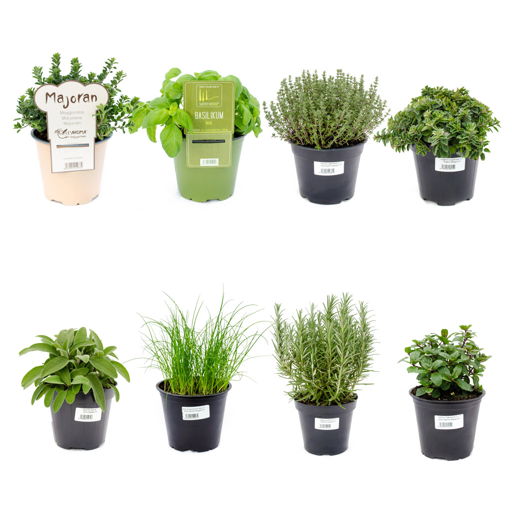 """Coltivare In Casa Piante Aromatiche kit 8 piante aromatiche """"aroma mix"""""""