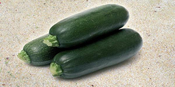 A04-zucchino-lungo-verde-scuro