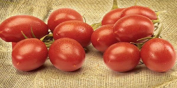 B14-pomodoro-piccadilly