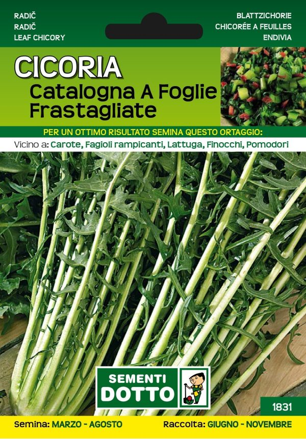 Cicoria-Catalogna-a-Foglie-Frastagliate-1