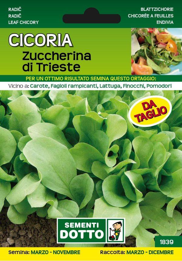 Cicoria-Zuccherina-di-Trieste-1