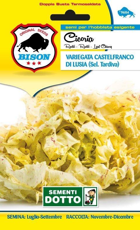 Cicoria-Variegata-Castelfranco-di-Lusia-sel.-Tardiva-1
